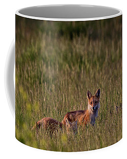 Red Fox Family Coffee Mug