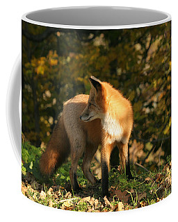 Coffee Mug featuring the photograph Red Fox In Shadows by Doris Potter