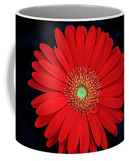 Coffee Mug featuring the photograph Red Gerber Daisy On Black by Sheila Brown