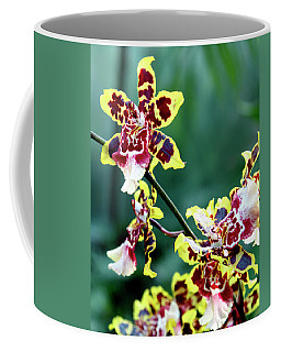 Coffee Mug featuring the photograph Striped Maroon And Yellow Orchid by Melinda Blackman