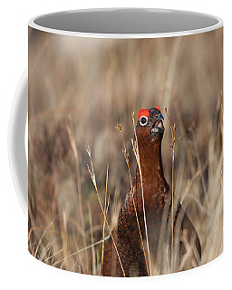 Red Grouse Calling Coffee Mug