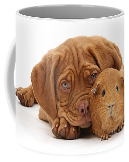 Red Guinea Pig And Dogue De Bordeaux Coffee Mug