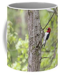Red-headed Woodpecker 2017-2 Coffee Mug by Thomas Young