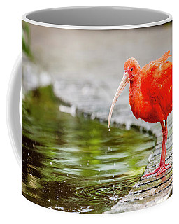 Coffee Mug featuring the photograph Red Ibis by Alexey Stiop