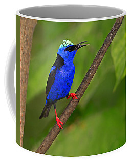 Red-legged Honeycreeper Coffee Mug