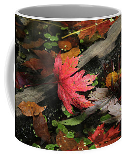 Coffee Mug featuring the photograph Red Maple Leaf In Pond by Doris Potter