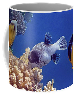 Red Sea Butterflyfish And Pufferfish Coffee Mug