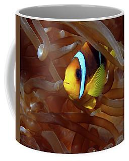Red Sea Clownfish, Eilat, Israel 8 Coffee Mug