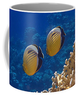 Red Sea Exquisite Butterflyfish  Coffee Mug