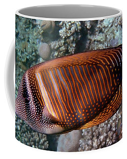 Red Sea Sailfin Tang 3 Coffee Mug