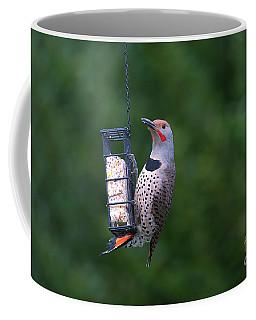 Red-shafted Northern Flicker On Suet Coffee Mug