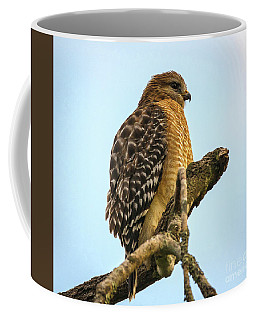 Red-shouldered Hawk - Buteo Lineatus Coffee Mug