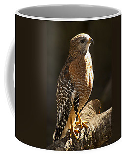 Coffee Mug featuring the photograph Red-shouldered Hawk by Carolyn Marshall