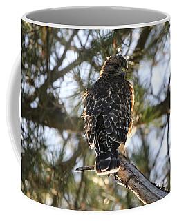 Red Shouldered Hawk Fledgling Coffee Mug