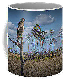 Red Shouldered Hawk In The Florida Everglades Coffee Mug