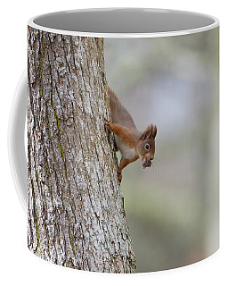 Red Squirrel Climbing Down A Tree Coffee Mug