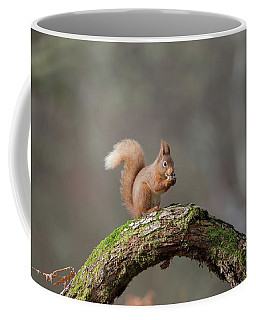 Red Squirrel Eating A Hazelnut Coffee Mug