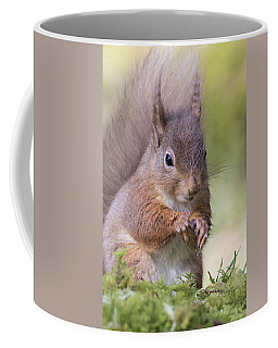 Red Squirrel - Scottish Highlands #1 Coffee Mug