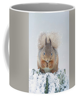 Red Squirrel Nibbles A Nut In The Snow Coffee Mug