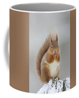 Red Squirrel Nibbling A Hazelnut In The Snow Coffee Mug