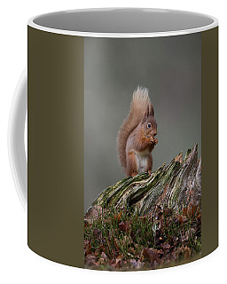 Red Squirrel Nibbling A Nut Coffee Mug