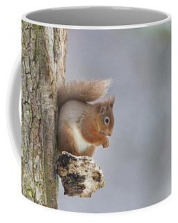 Red Squirrel On Tree Fungus Coffee Mug