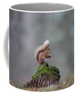 Red Squirrel Peeling A Hazelnut Coffee Mug