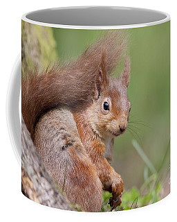 Red Squirrel - Scottish Highlands  #17 Coffee Mug