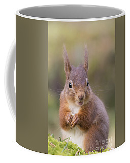 Red Squirrel - Scottish Highlands #18 Coffee Mug