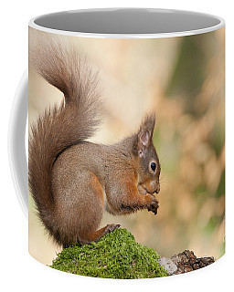 A Moment Of Meditation - Red Squirrel #27 Coffee Mug