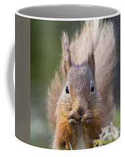 Red Squirrel - Scottish Highlands #28 Coffee Mug