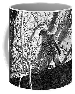 Red Tail Hawk In Black And White Coffee Mug