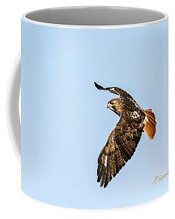 Red-tail Hawk In Flight Coffee Mug