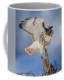 Coffee Mug featuring the photograph Red Tail Hawk Perch by Bill Wakeley