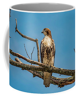 Red Tail Hawk Perched Coffee Mug