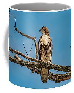 Red Tail Hawk Perched Coffee Mug