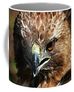 Coffee Mug featuring the photograph Red-tail Hawk Portrait by Anthony Jones