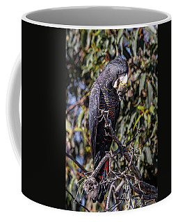 Red Tailed Black Cockatoo Coffee Mug
