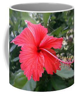 Red-tailed Flower Portrait Coffee Mug