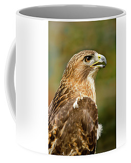 Red-tailed Hawk Close-up Coffee Mug by Ann Bridges