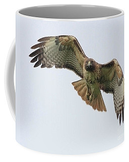 Red Tailed Hawk Finds Its Prey Coffee Mug