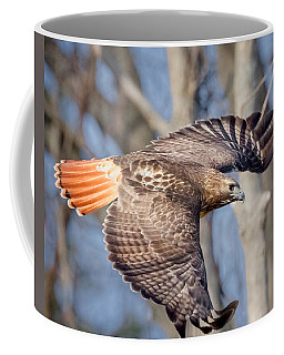 Coffee Mug featuring the photograph Red Tailed Hawk Flying by Bill Wakeley