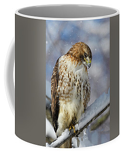 Coffee Mug featuring the photograph Red Tailed Hawk, Glamour Pose by Michael Hubley