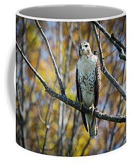 Red-tailed Hawk In The Fall Coffee Mug