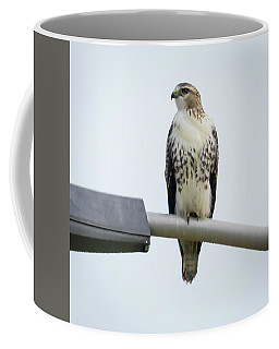 Coffee Mug featuring the photograph Red-tailed Hawk Looking At Me by Ricky L Jones