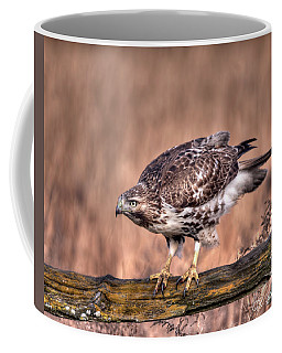 Red-tailed Hawk On A Fence Coffee Mug by CR  Courson