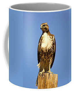 Red-tailed Hawk On Post Coffee Mug