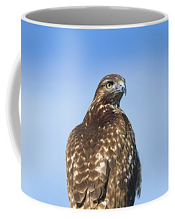 Red-tailed Hawk Perched Looking Back Over Shoulder Coffee Mug