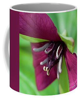 Red Trillium.. Coffee Mug by Nina Stavlund