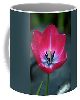 Red Tulip Blossom With Stamen And Petals And Pistil Coffee Mug